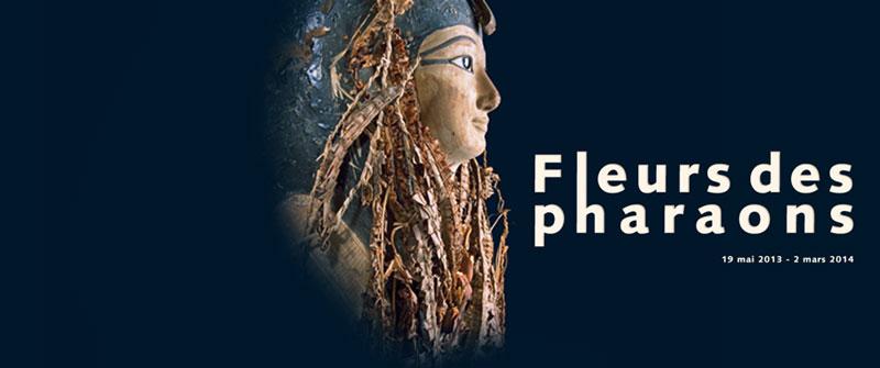 Fleurs_pharaons_800